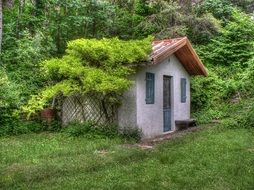 vines on picturesque small house at trees