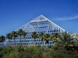 palm trees at glass pyramid, greenhouse of moody gardens, usa, texas, galveston
