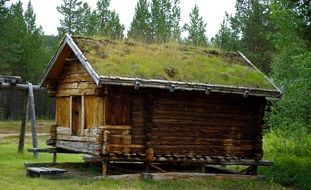 grass on roof of old wooden house at forest, finland