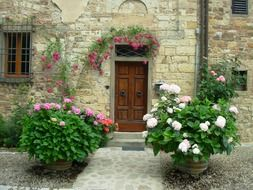 blooming potted plants at entrance door of old building