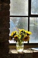 sunflowers, bouquet at window in abandoned building