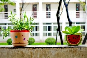 green plants in funny pots on window sill