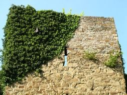 greenery on the stone wall