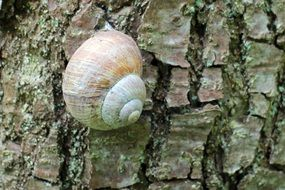 snail in a shell on a tree