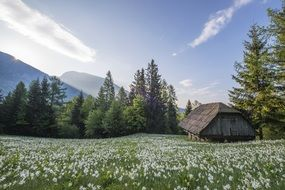 meadow hut stable mountains range white flowers