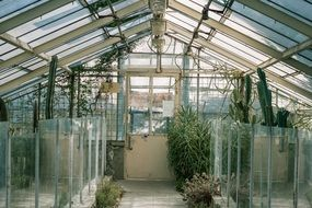 glasshouse greenhouse green grow