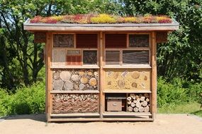 wood insect house hibernate