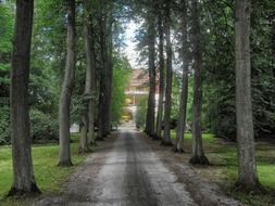 soil road through forest to house, germany, paderborn