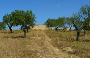 trail among olive trees to ruined stone building on meadow, spain, mallorca