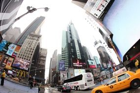 New York city fish eye