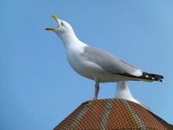 white sea gull bird sky