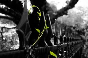 green vine on wrought iron fence
