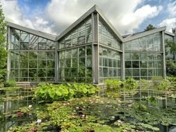 blooming water plants on pond at greenhouse in botanical garden, germany, frankfurt