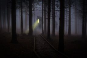 fearful mood foggy mist forest trees spooky