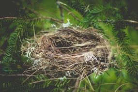 nature bird nest nature spruce