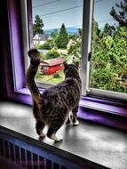 back view of cat looking through window