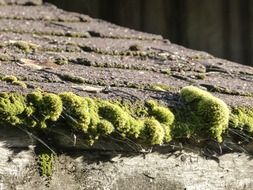 moss covered wooden roof, fragment, close up