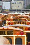 orange roofs of school buses on street in city, usa, new york