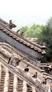 Imperial roof decoration of ancient chinese building