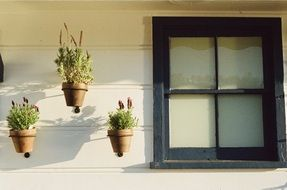 potted plants at window on facade