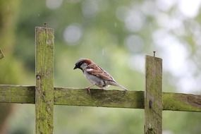 sparrow bird fence