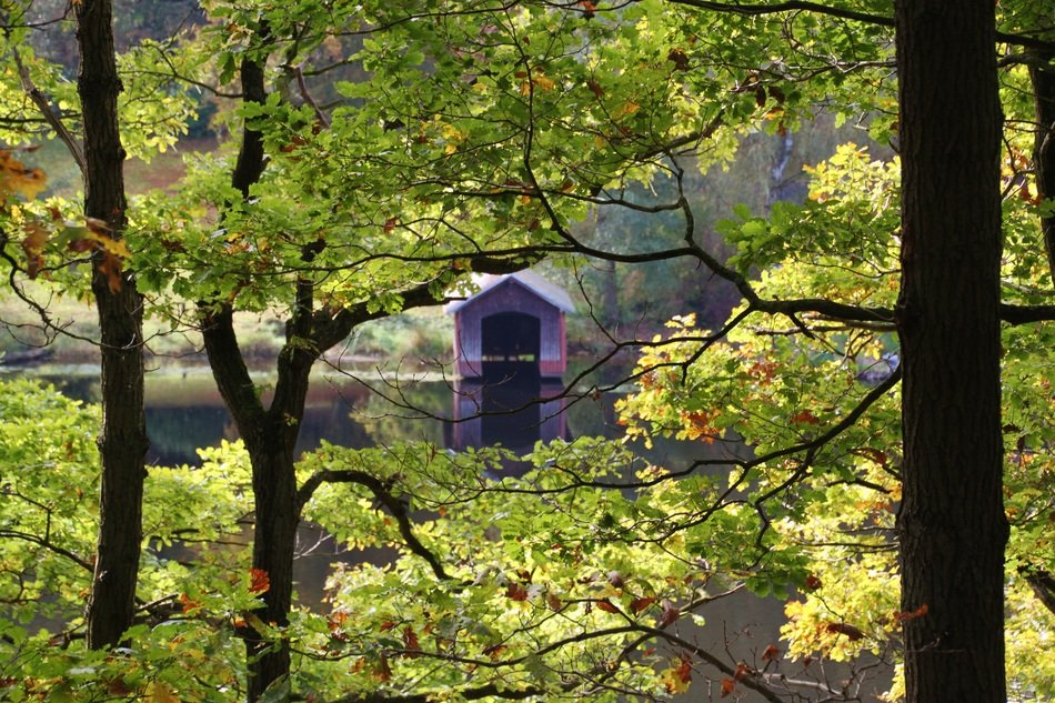 view of purple boat house on water through beech leaves