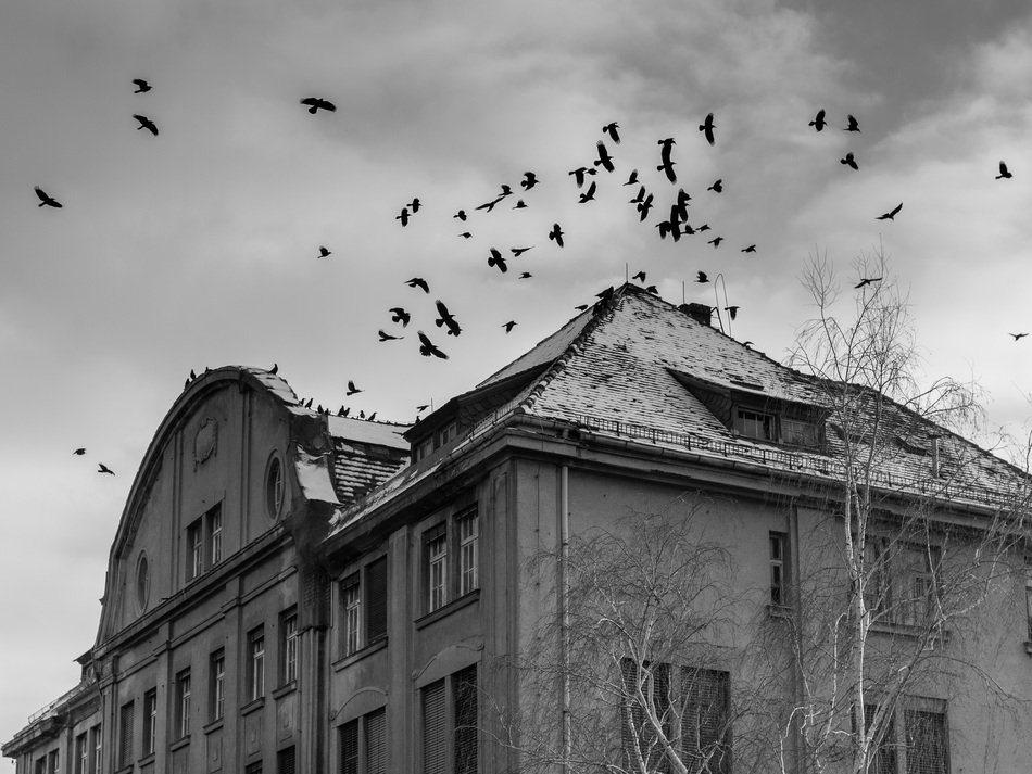 raven birds in cloudy sky above old ruined house