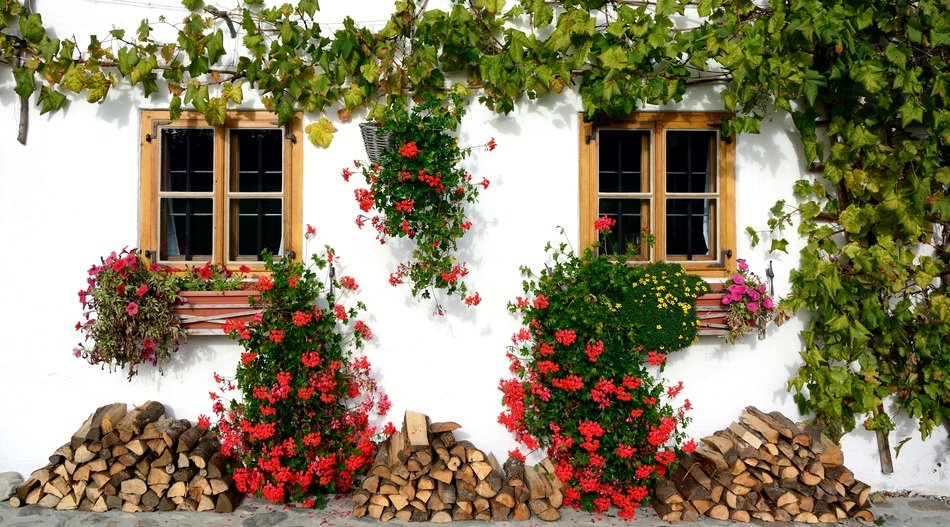 white facade of village house, decorated with grape vine and flowers
