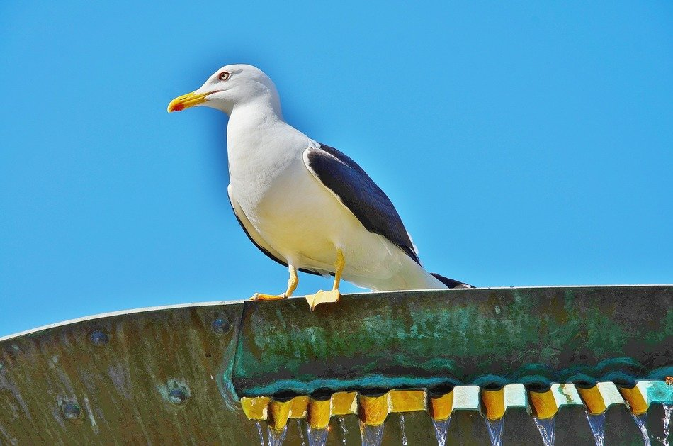 sea gull sits on roof at sky