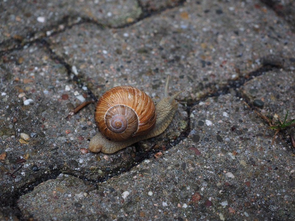 small snail crawling on the pavement