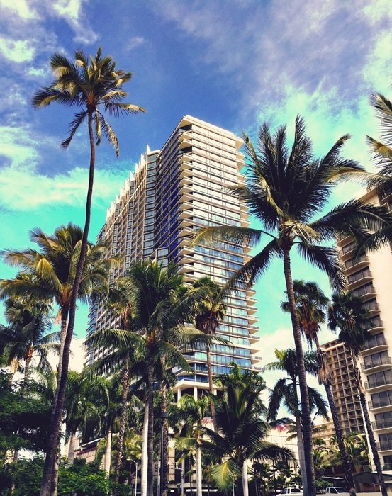 luxury waikiki hotel behind palm trees, usa, hawaii, honolulu, oahu