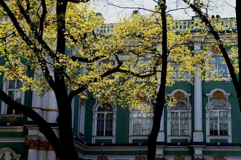 winter palace behind trees at spring, russia, st petersburg