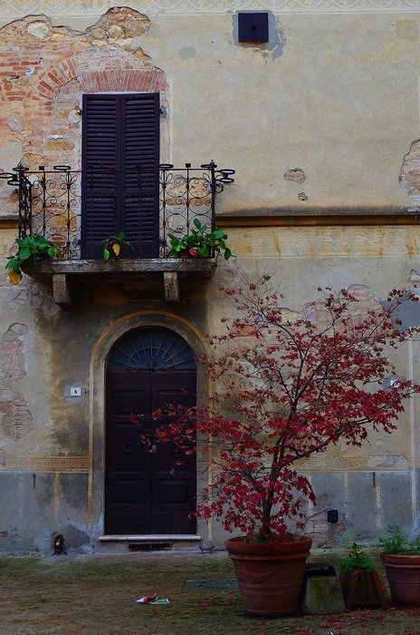 potted tree with red leaves at old wall, italy