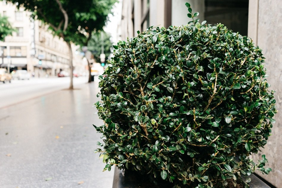 shrub on sidewalk in city