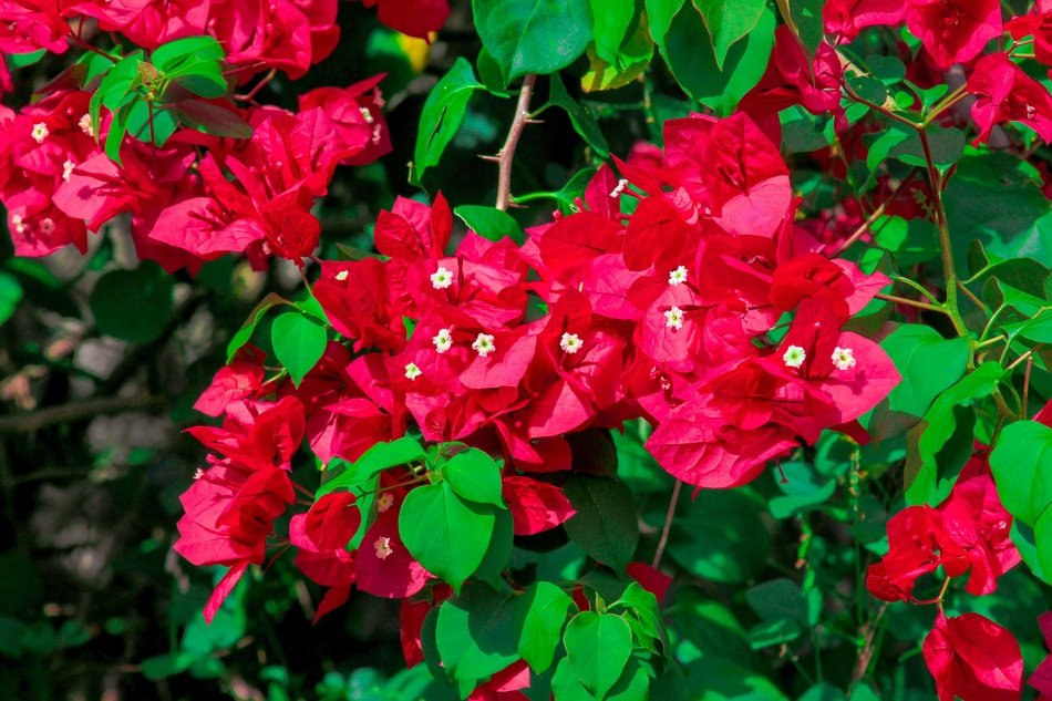 the beauty of nature red flowers