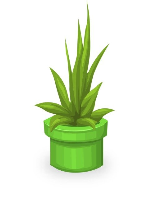 green potted plant, illustration
