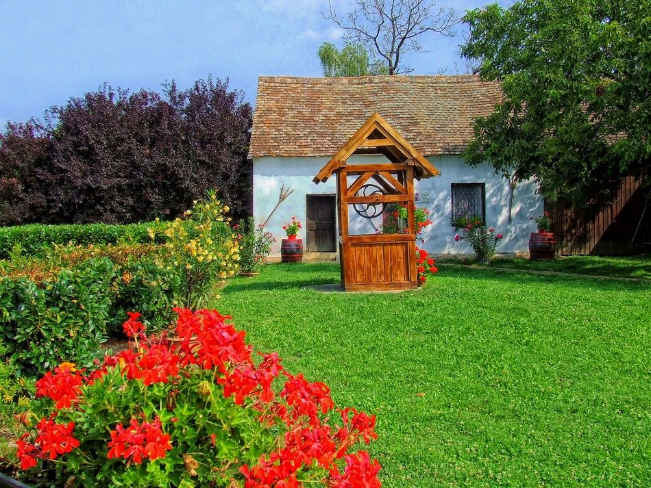 blooming plants in summer garden at village house, czech republic