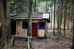 old hut in a pine forest
