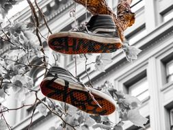black sneakers hanging on branch in city, usa, california, san francisco