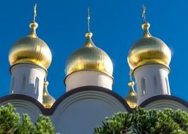 view of the golden domes of a church in Moscow