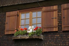 farmhouse window with geranium flowers and shutters