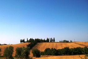 golden fields under blue sky, scenic countryside, italy, tuscany