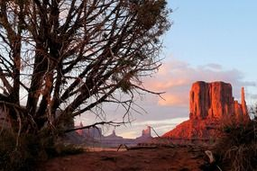 dry tree in front of red rock formations in desert at sunset, usa, arizona, monument valley