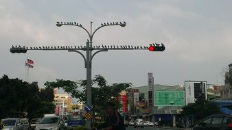birds sitting on traffic lights in city, china, taiwan ,kaohsiung