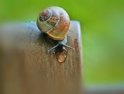 Snail with shell in summer