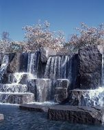 blooming cherry trees at waterfall, usa, washington dc, The Franklin Delano Roosevelt Memorial