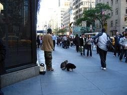 dark skin beggar with cats on busy street in city, usa, manhattan, nyc