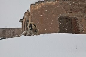 homeless dog on a snowdrift