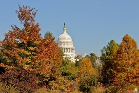 dome of capitol at blue sky behind colorful autumn trees, usa, washington dc