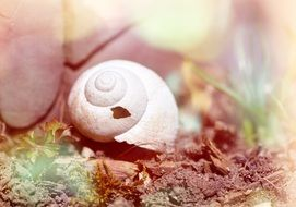 empty snail shell, blurred background, pastel colors